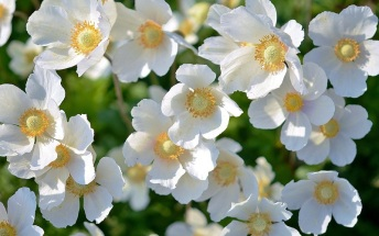 signification-fleurs-blanche